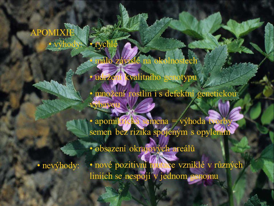 APOMIXIE výhody: rychlé. málo závislé na okolnostech. udržení kvalitního genotypu. množení rostlin i s defektní genetickou výbavou.