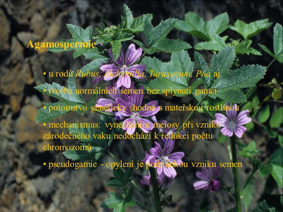 Agamospermie u rodů Rubus, Alchemilla, Taraxacum, Poa aj.