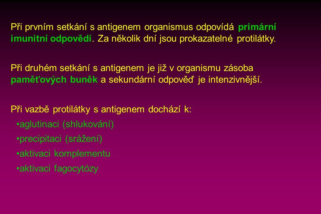 Při prvním setkání s antigenem organismus odpovídá primární imunitní odpovědí. Za několik dní jsou prokazatelné protilátky.