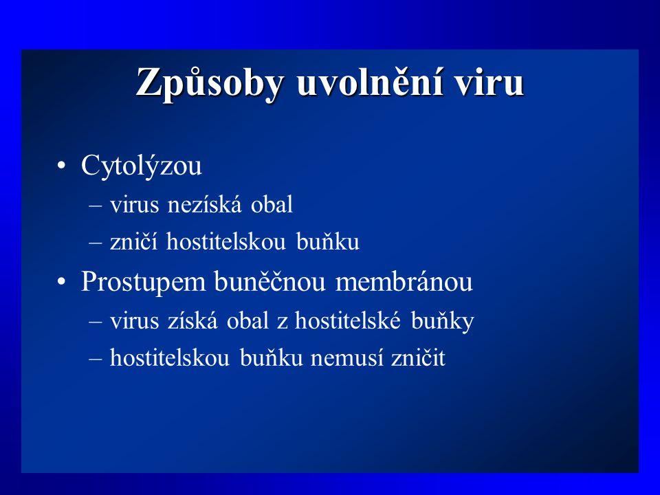 Způsoby uvolnění viru Cytolýzou Prostupem buněčnou membránou