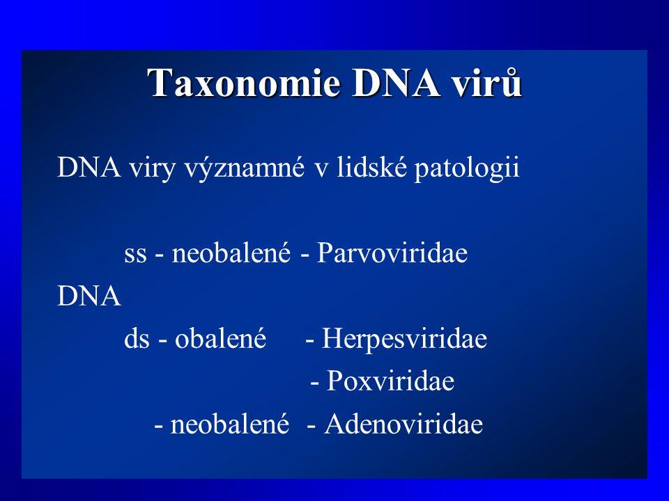 Taxonomie DNA virů DNA viry významné v lidské patologii