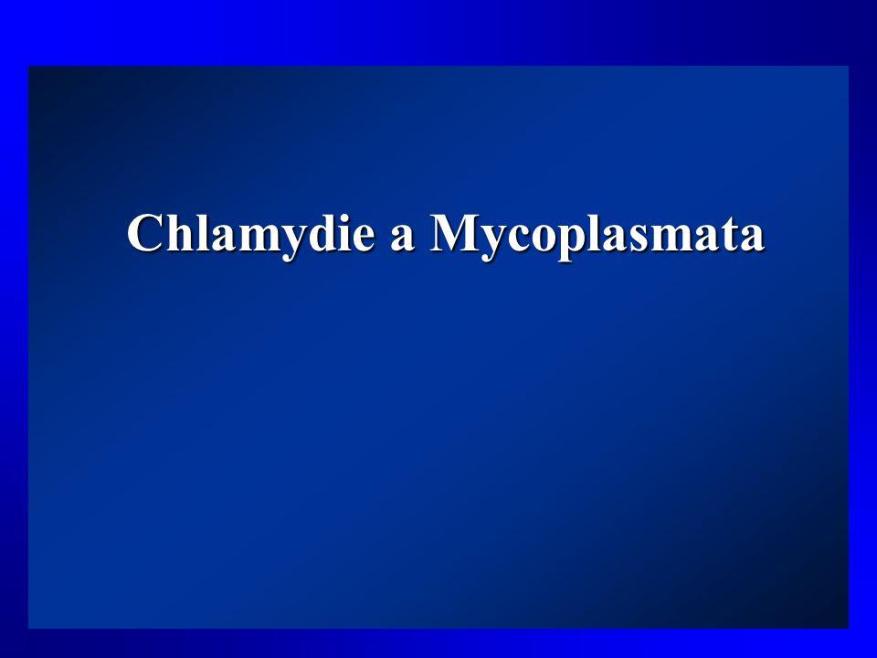 Chlamydie a Mycoplasmata