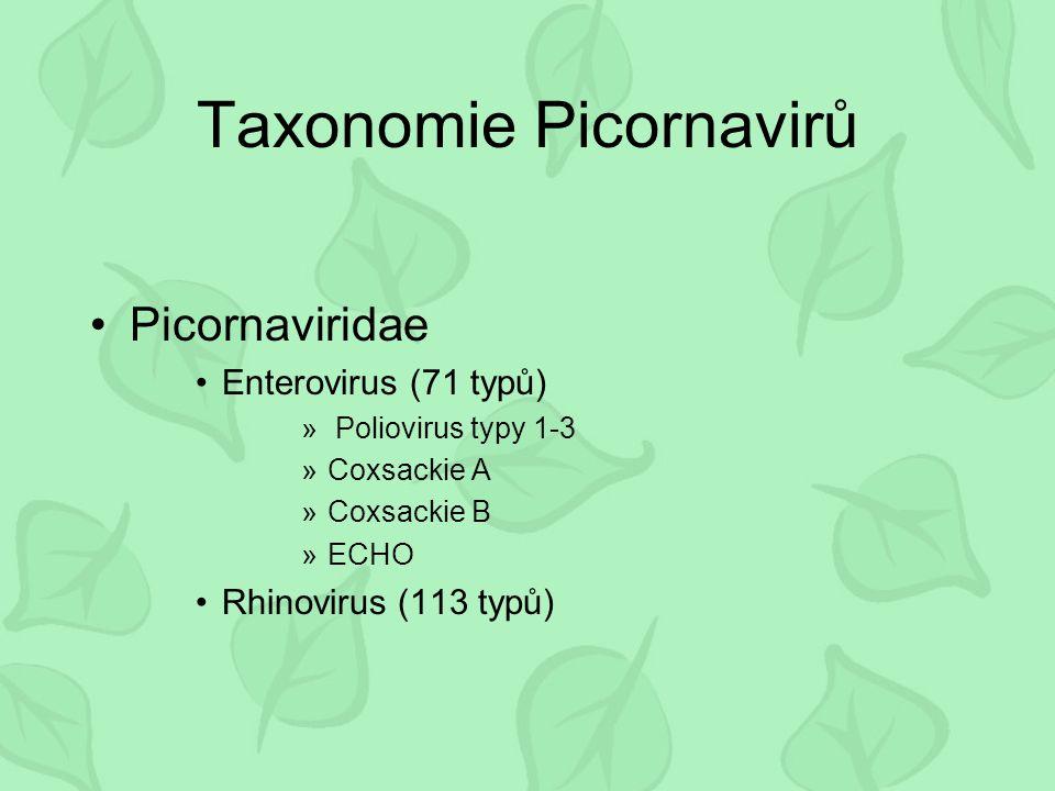 Taxonomie Picornavirů