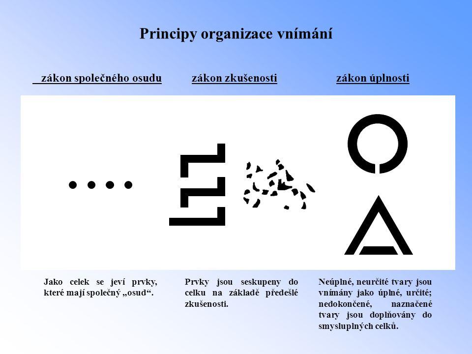 Principy organizace vnímání