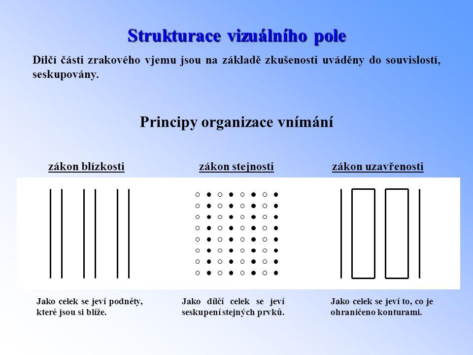 Strukturace vizuálního pole