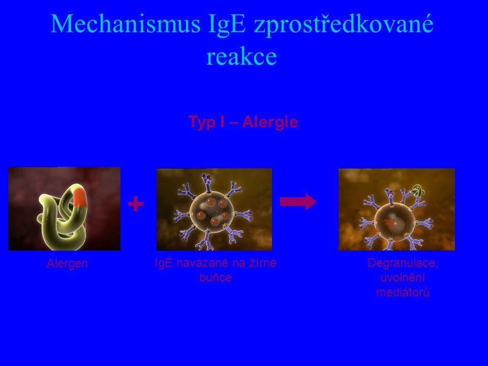 Mechanismus IgE zprostředkované reakce