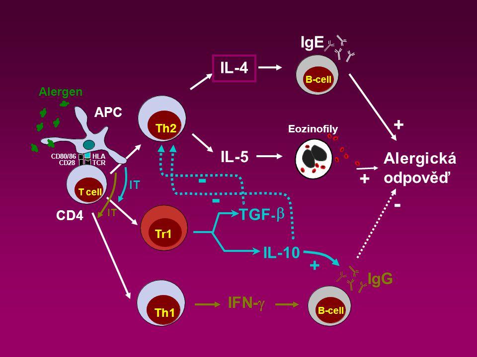 - - + + + IgE IL-4 IL-5 Alergická odpověď TGF- b IL-10 IgG IFN-g APC