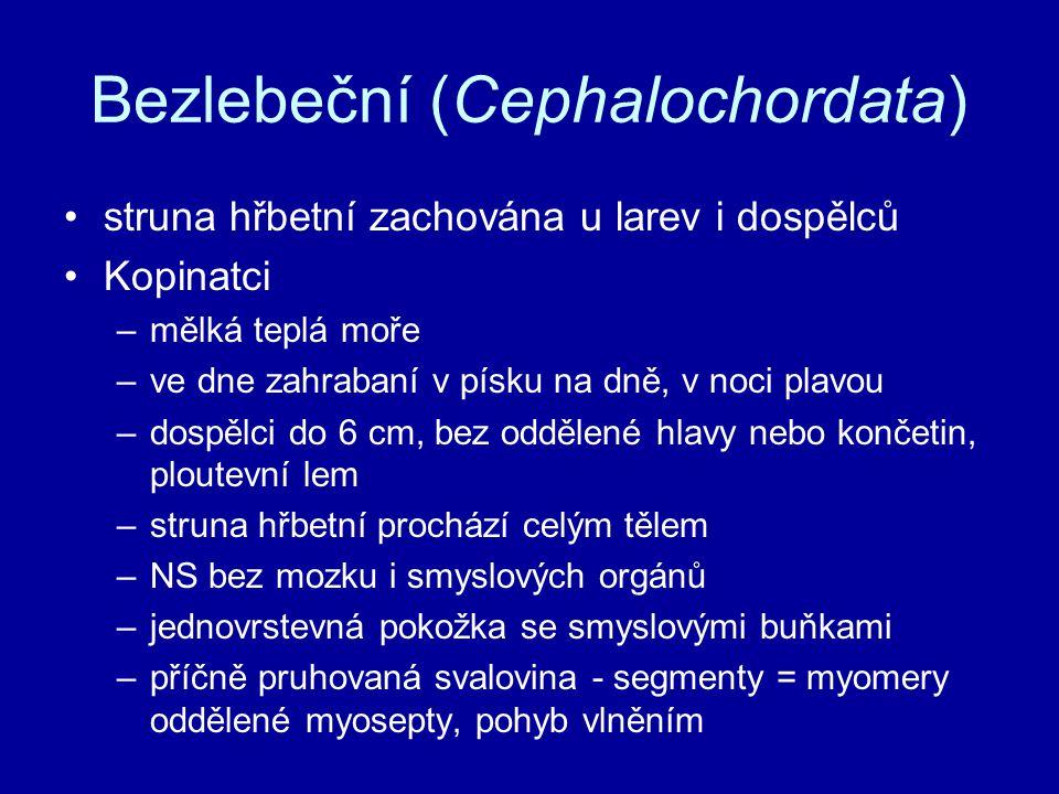 Bezlebeční (Cephalochordata)
