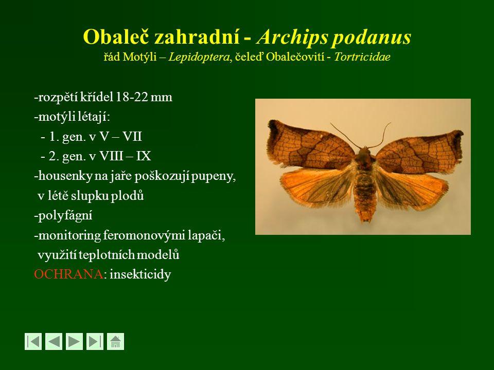 Obaleč zahradní - Archips podanus řád Motýli – Lepidoptera, čeleď Obalečovití - Tortricidae
