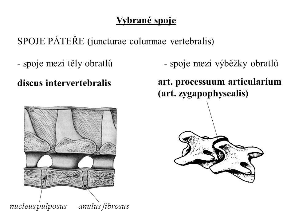 SPOJE PÁTEŘE (juncturae columnae vertebralis)