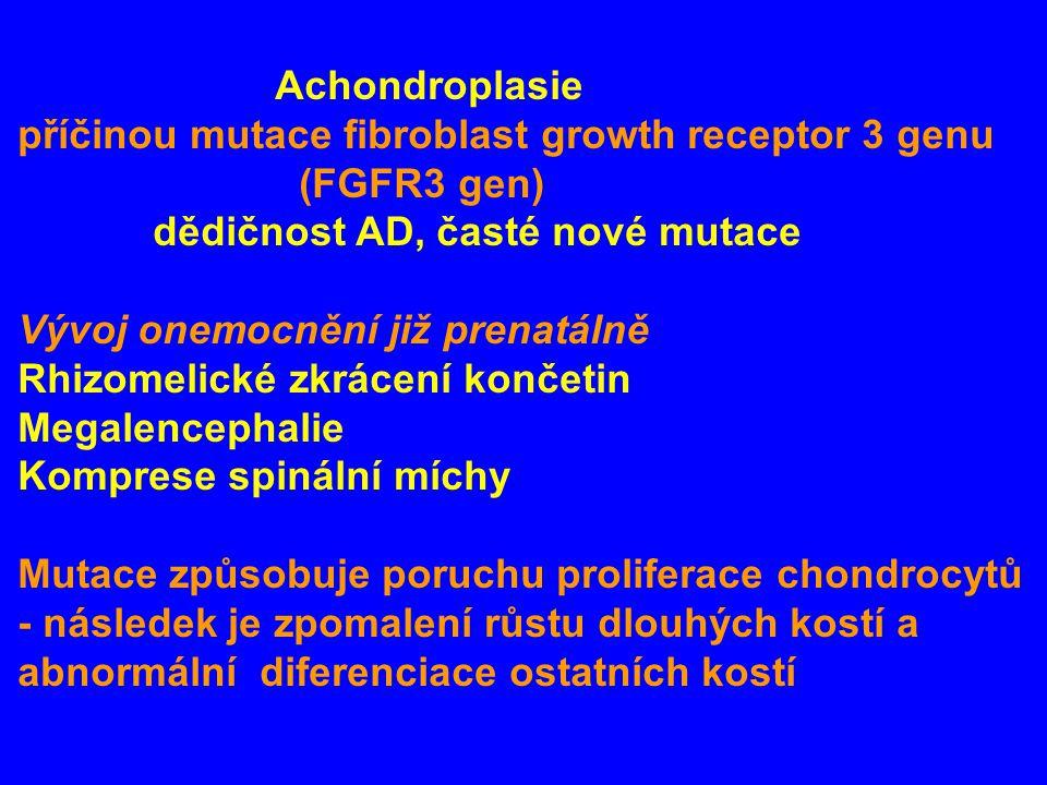 Achondroplasie příčinou mutace fibroblast growth receptor 3 genu. (FGFR3 gen) dědičnost AD, časté nové mutace.