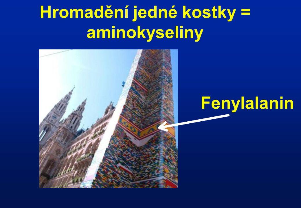 Hromadění jedné kostky = aminokyseliny