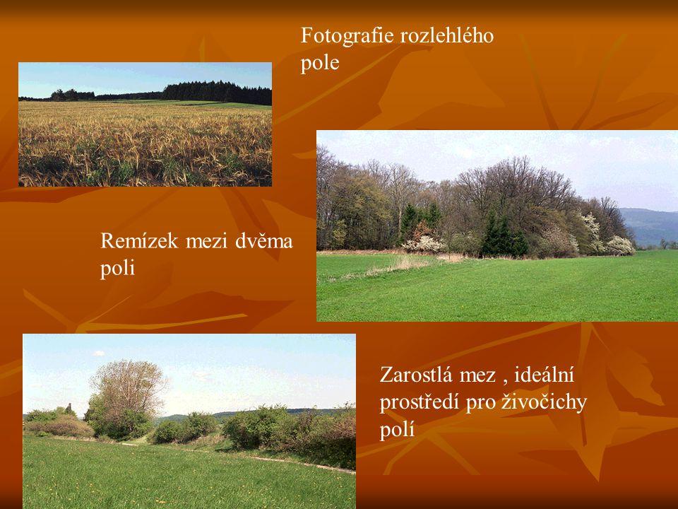 Fotografie rozlehlého pole