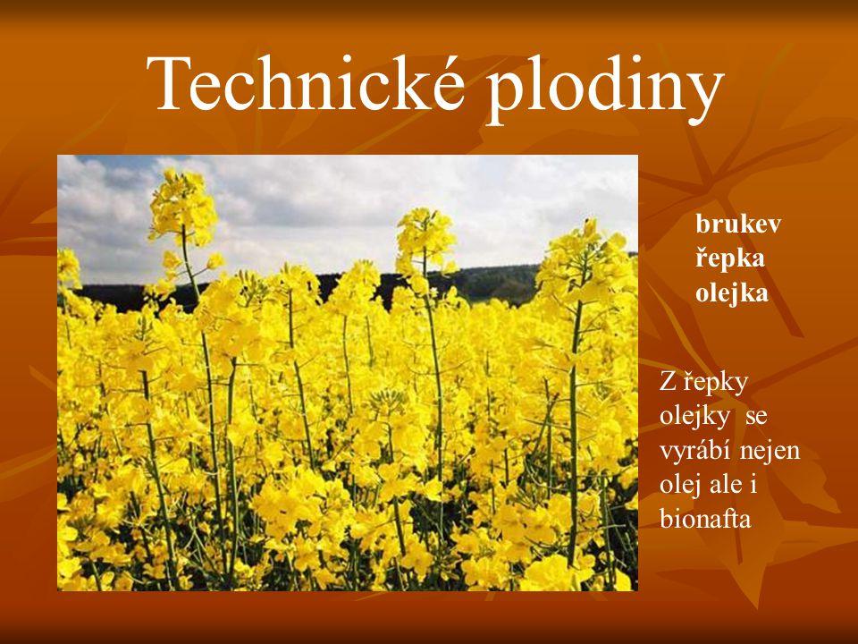 Technické plodiny brukev řepka olejka