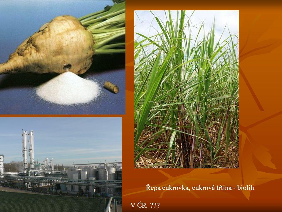 Řepa cukrovka, cukrová třtina - biolíh