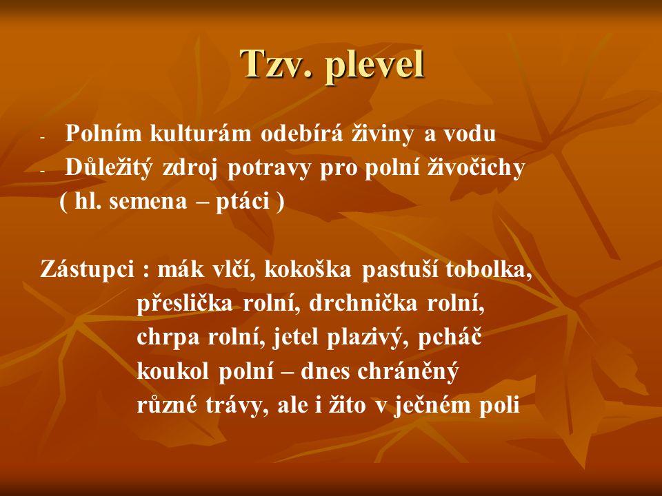 Tzv. plevel Polním kulturám odebírá živiny a vodu