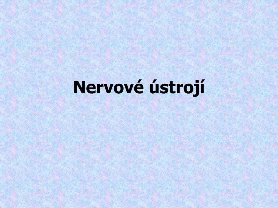 Nervové ústrojí