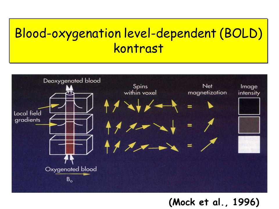 Blood-oxygenation level-dependent (BOLD) kontrast