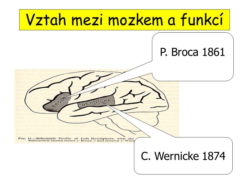 Vztah mezi mozkem a funkcí