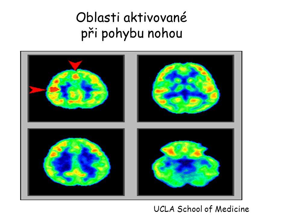 Oblasti aktivované při pohybu nohou