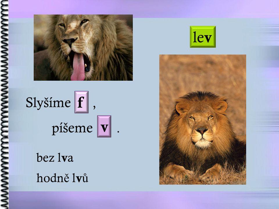 lev Slyšíme , f v píšeme . bez lva hodně lvů