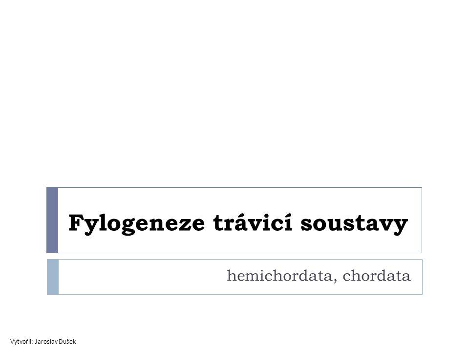 Fylogeneze trávicí soustavy