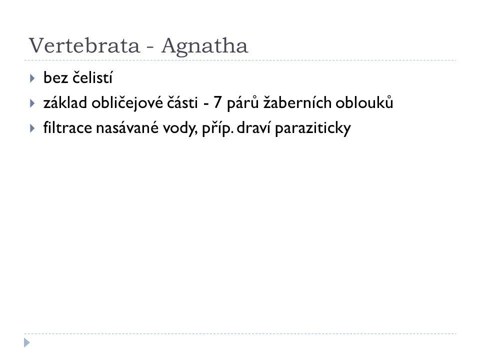 Vertebrata - Agnatha bez čelistí