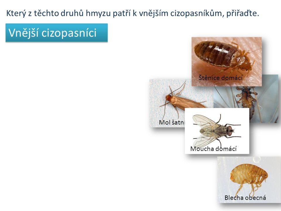Který z těchto druhů hmyzu patří k vnějším cizopasníkům, přiřaďte.