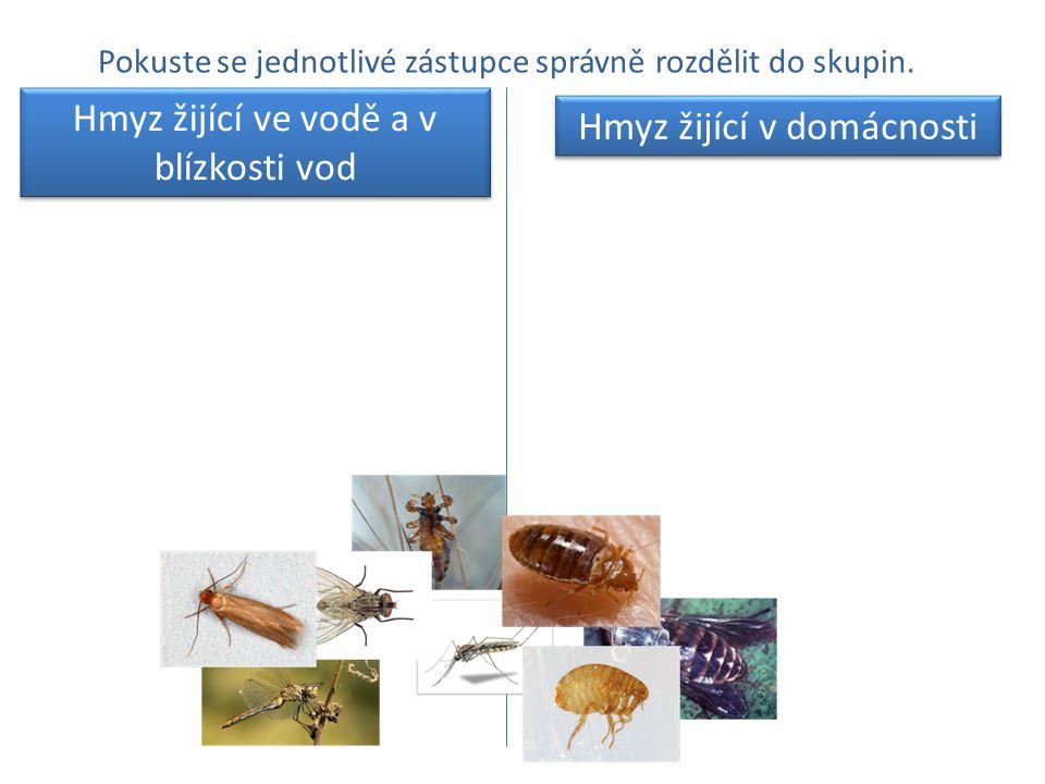 Hmyz žijící ve vodě a v blízkosti vod Hmyz žijící v domácnosti