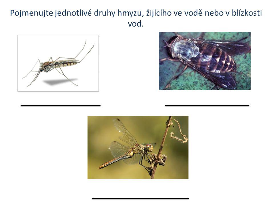 Pojmenujte jednotlivé druhy hmyzu, žijícího ve vodě nebo v blízkosti vod.