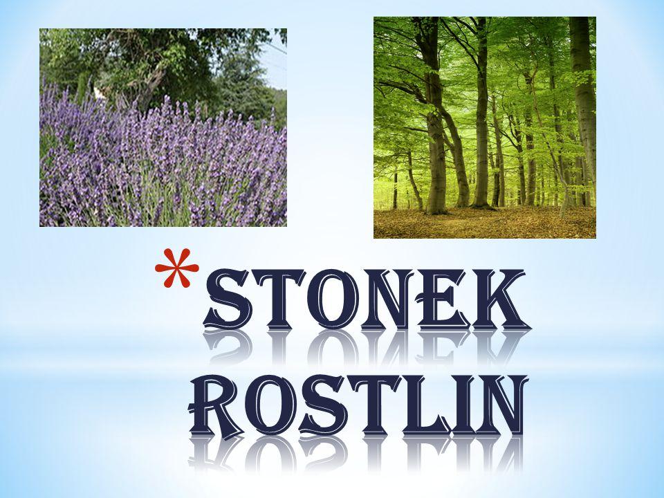 Stonek rostlin