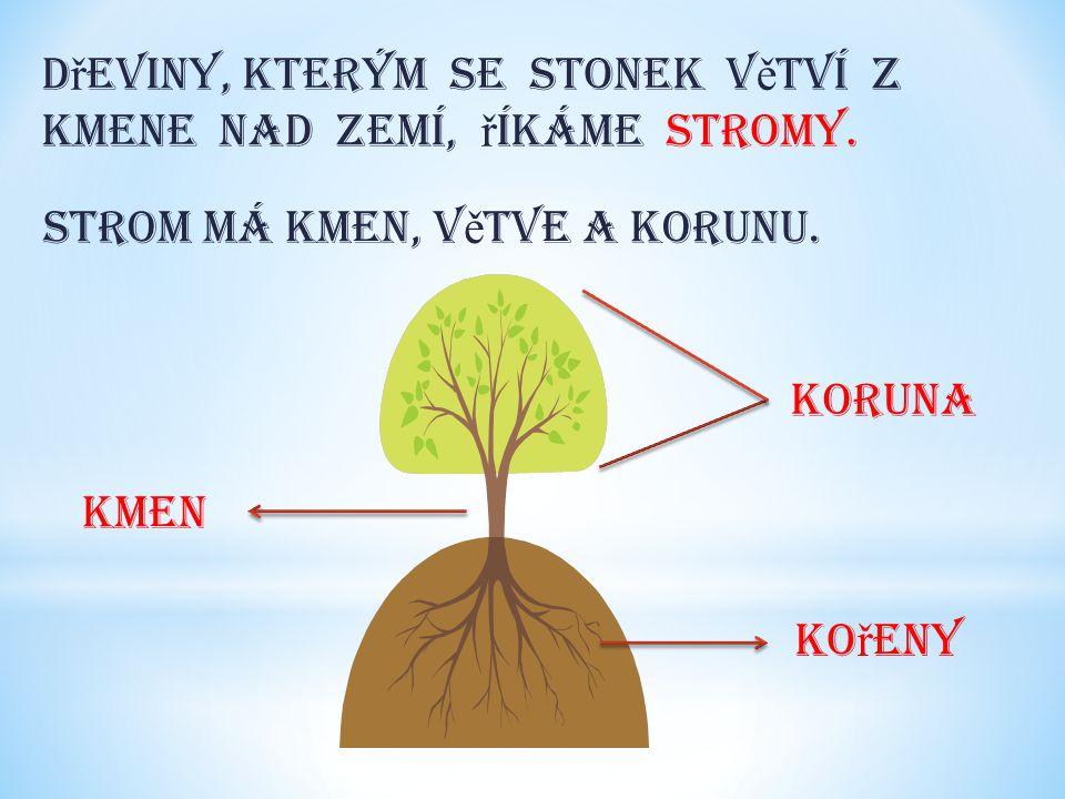 Dřeviny, kterým se stonek větví z kmene nad zemí, říkáme stromy.