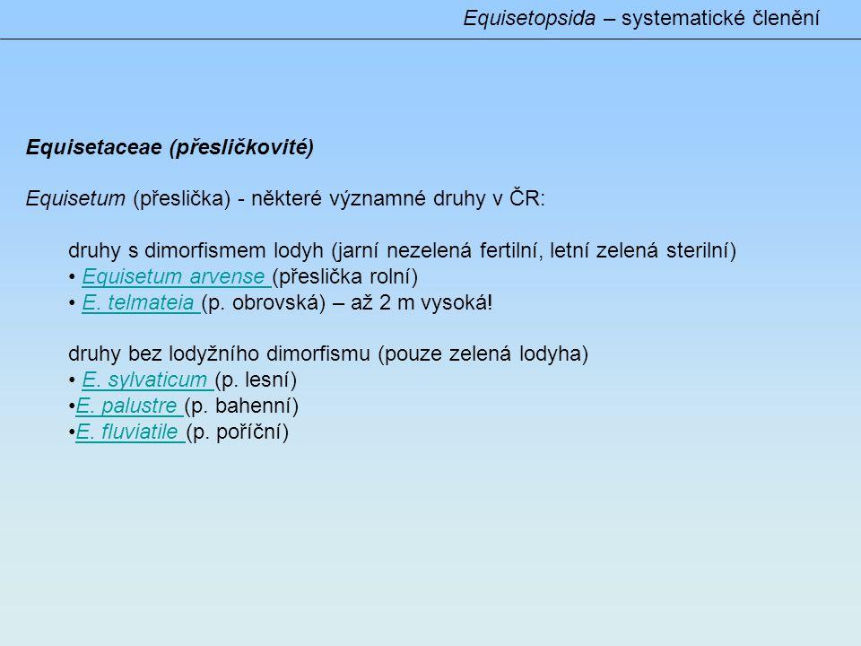 Equisetopsida – systematické členění