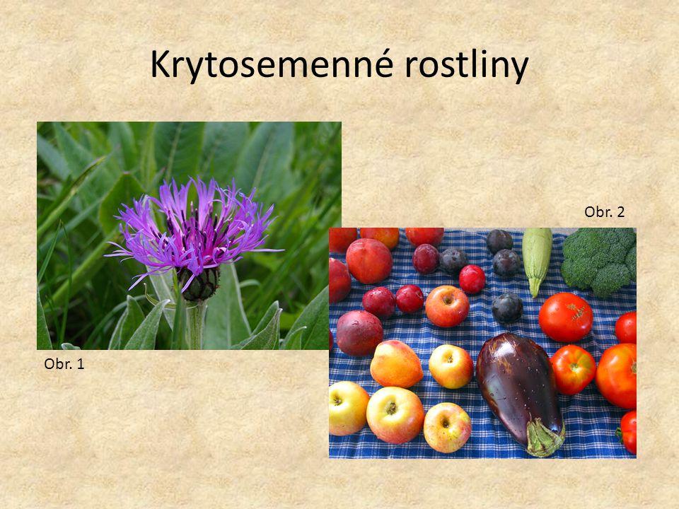 Krytosemenné rostliny