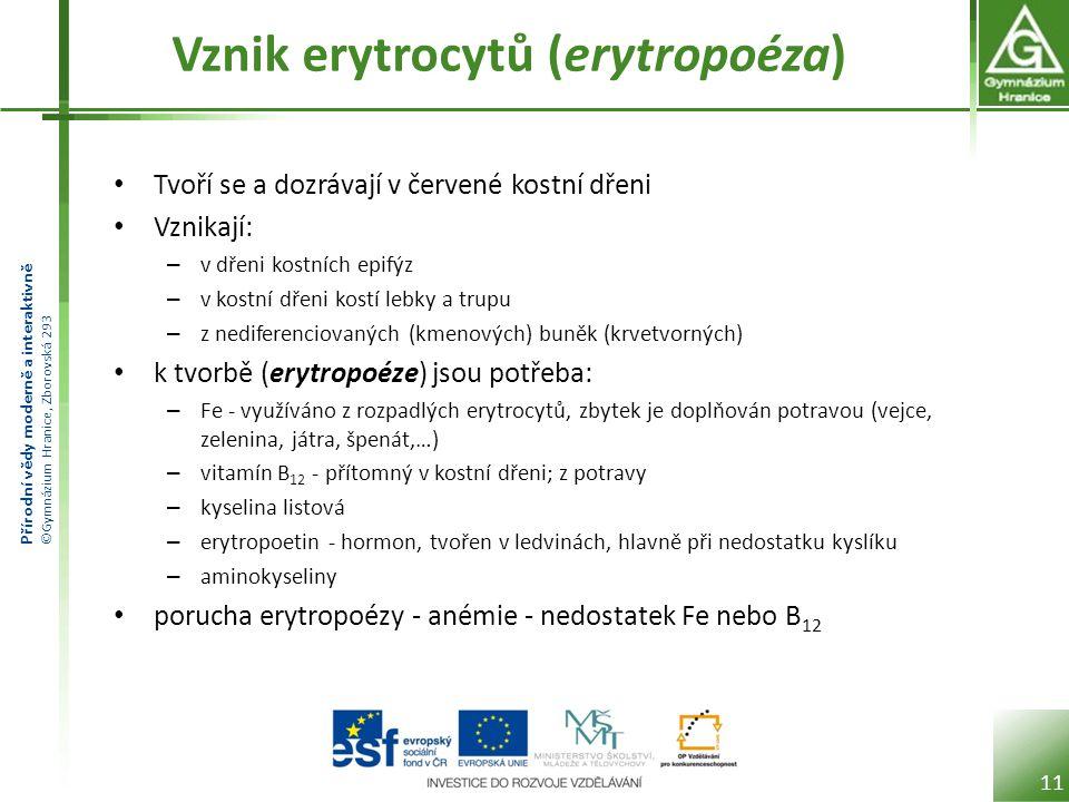 Vznik erytrocytů (erytropoéza)