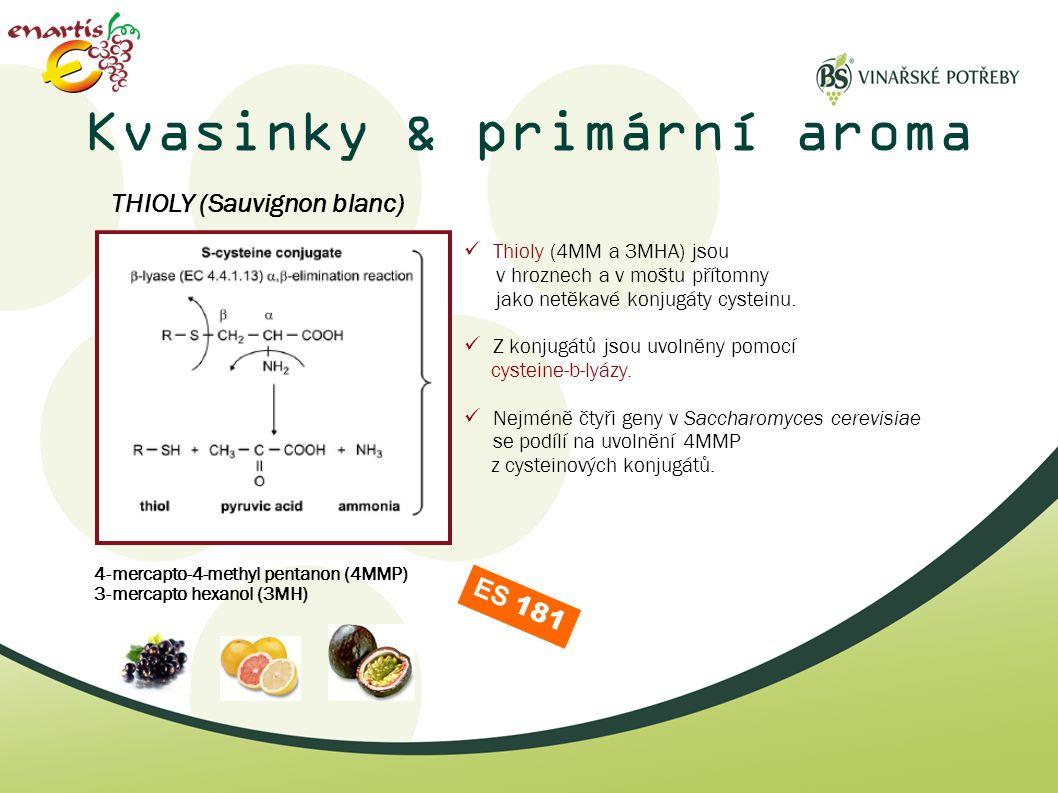 Kvasinky & primární aroma