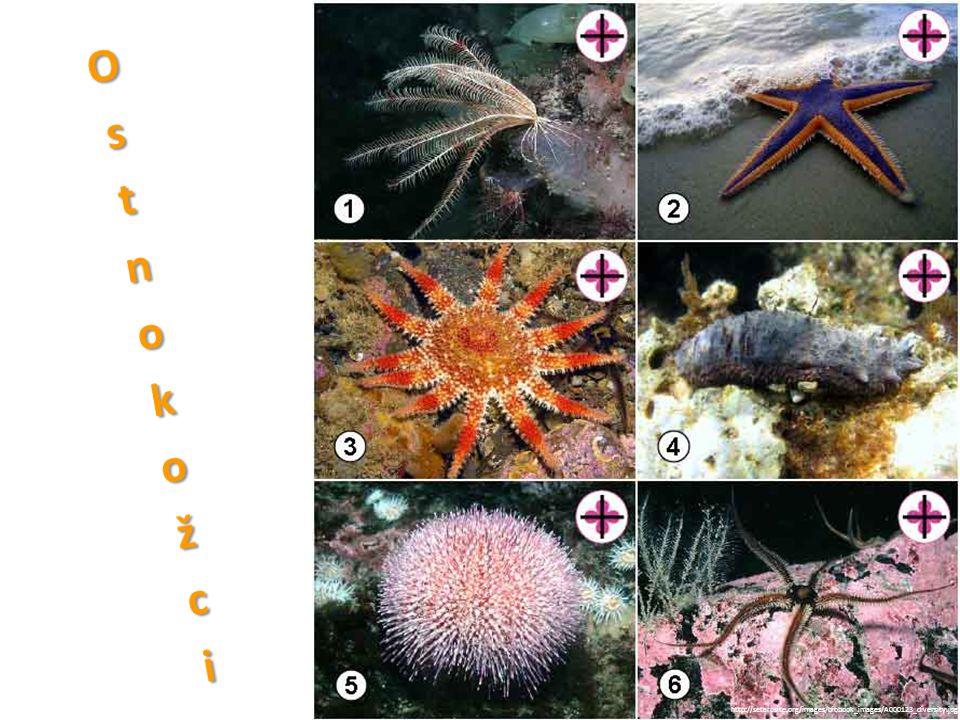 Ostnokožci http://setarosite.org/images/biobook_images/A000123_diversity.jpg