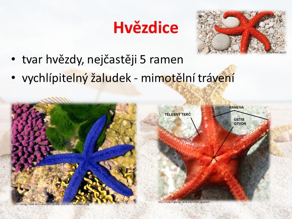 Hvězdice tvar hvězdy, nejčastěji 5 ramen