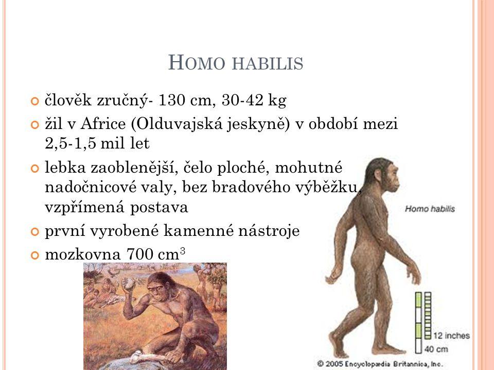 Homo habilis člověk zručný- 130 cm, 30-42 kg