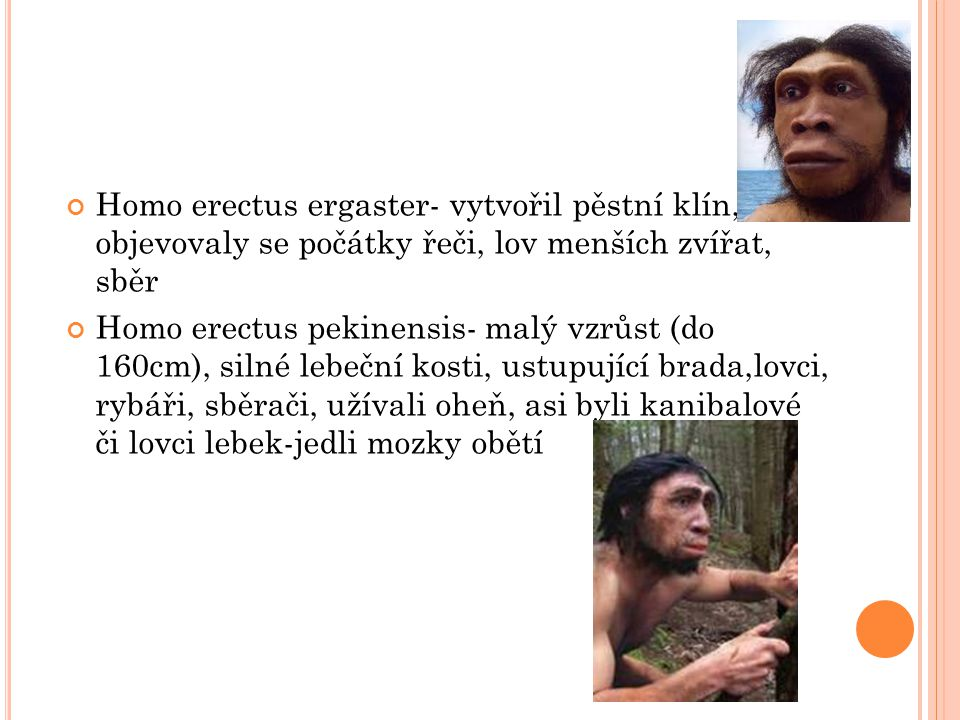 Homo erectus ergaster- vytvořil pěstní klín, objevovaly se počátky řeči, lov menších zvířat, sběr