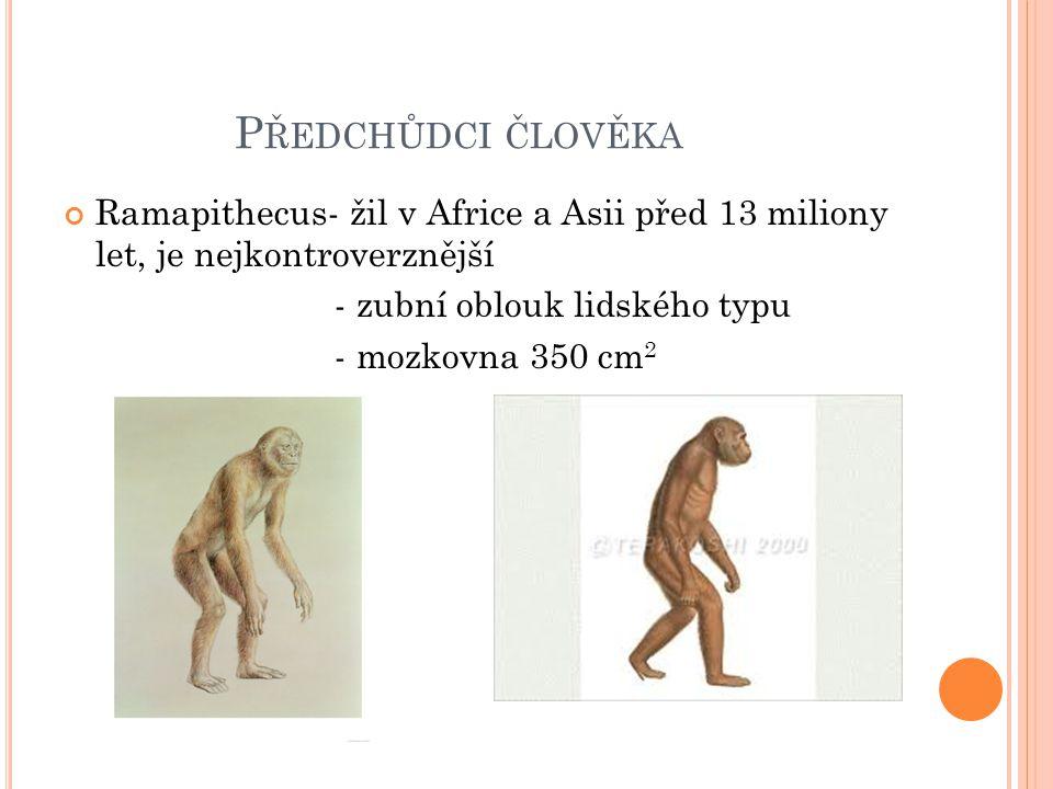 Předchůdci člověka Ramapithecus- žil v Africe a Asii před 13 miliony let, je nejkontroverznější. - zubní oblouk lidského typu.