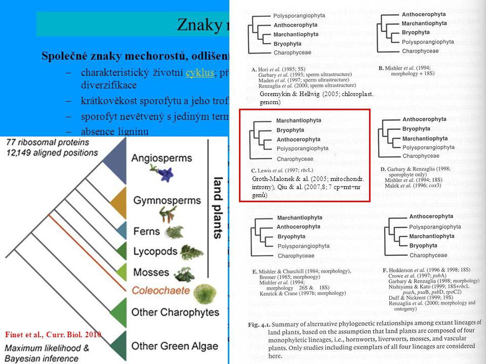 Goremykin & Hellwig (2005; chloroplast. genom)