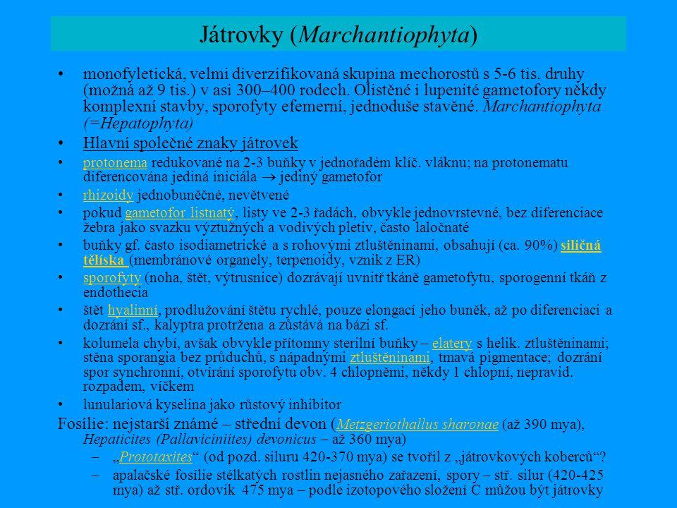 Játrovky (Marchantiophyta)