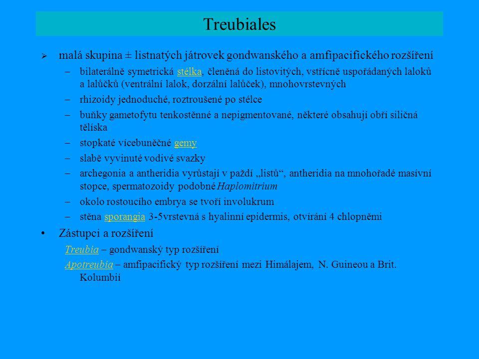 Treubiales malá skupina ± listnatých játrovek gondwanského a amfipacifického rozšíření.