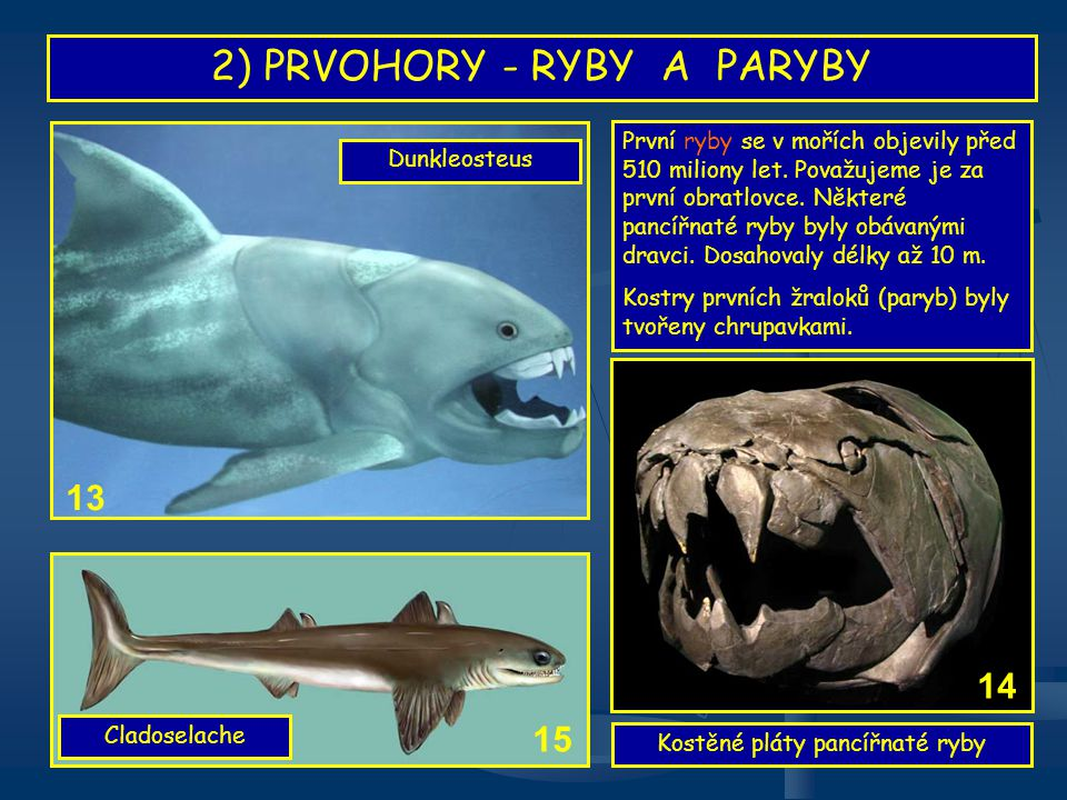 2) PRVOHORY - RYBY A PARYBY