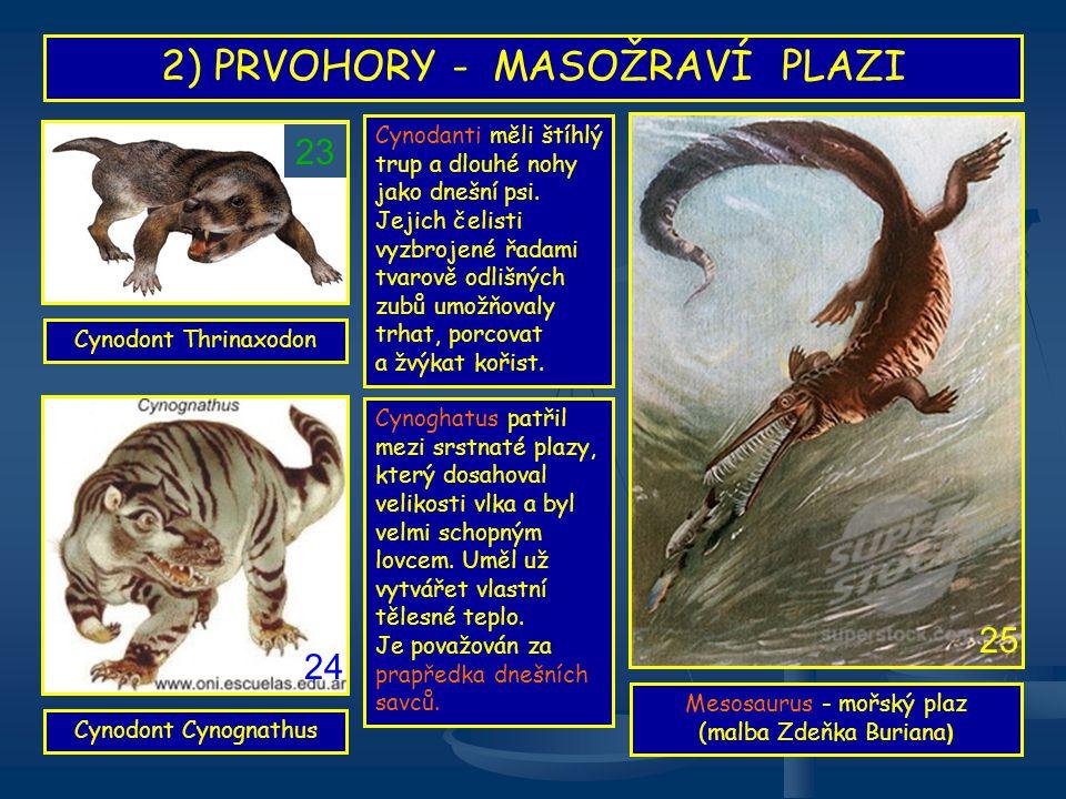 2) PRVOHORY - MASOŽRAVÍ PLAZI