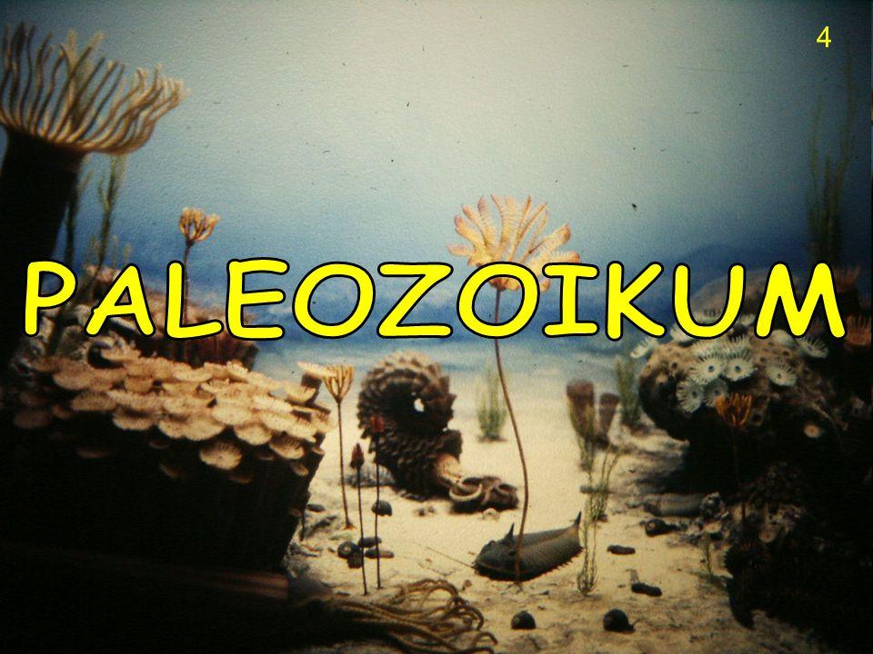 4 PALEOZOIKUM