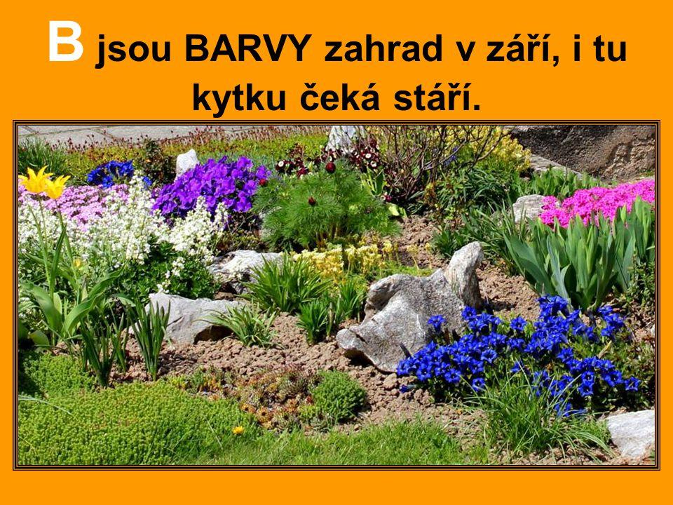 B jsou BARVY zahrad v září, i tu kytku čeká stáří.