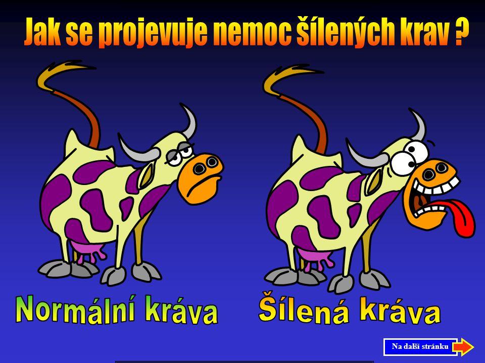 Jak se projevuje nemoc šílených krav