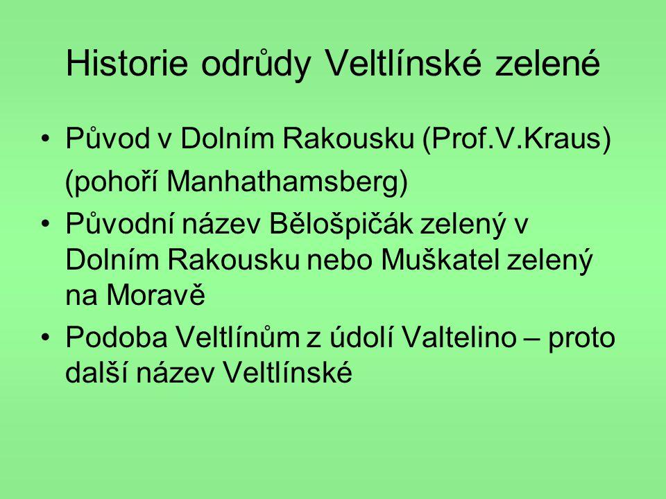Historie odrůdy Veltlínské zelené